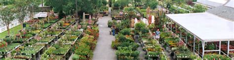 wwwhouston garden center xmas tree sale burke va perennials trees shrubs for sale burke nursery garden centre