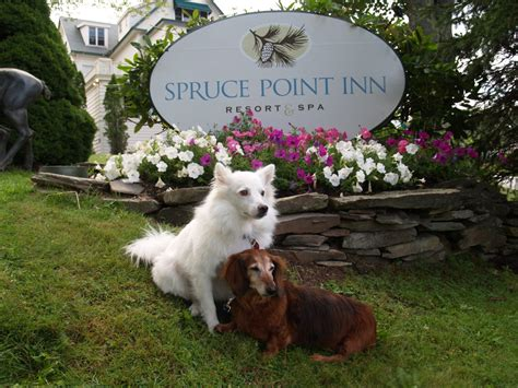 pet friendly places to stay dog cat and horse friendly 10 dog friendly places to stay from york to northport