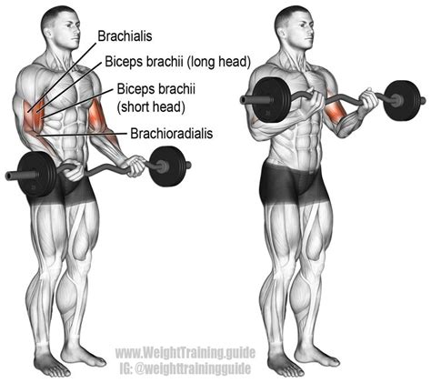1000 ideas about big biceps on back and