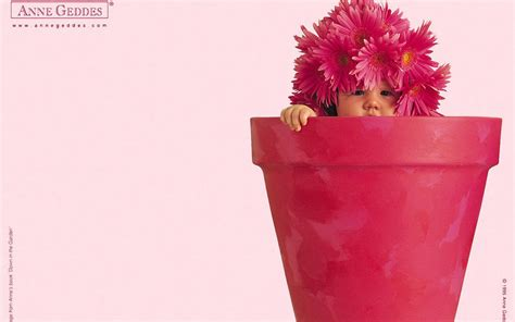 wallpaper flower in pot flower pot wallpaper wallpapersafari
