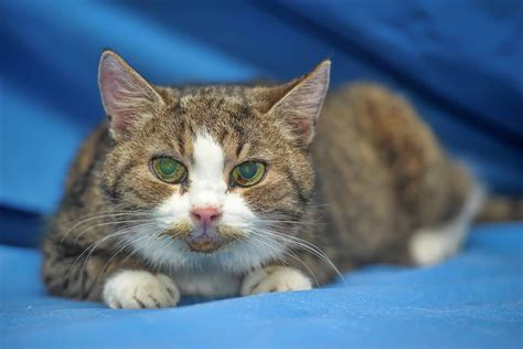 why do cats pee on the bed why do cats pee on beds 28 images ask a behaviorist
