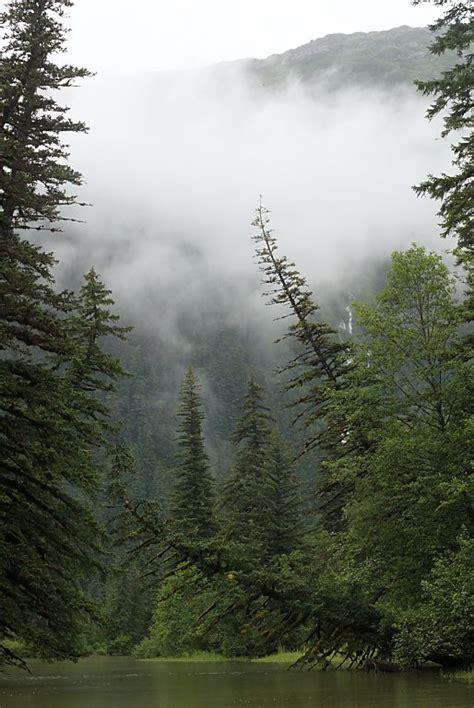 the mystery of the trees of southeast alaska books southeast alaska july 2003 photos on thomasoneil