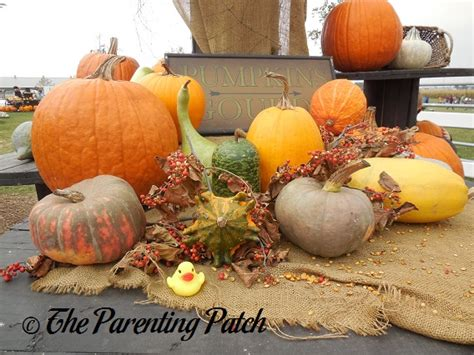 pumpkin rubber st the duck and the pumpkins and gourds the rubber ducky