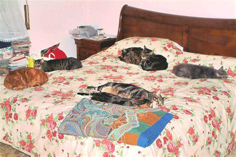 gatto a letto cani e gatti nel letto quot pericolosi quot ti presento il