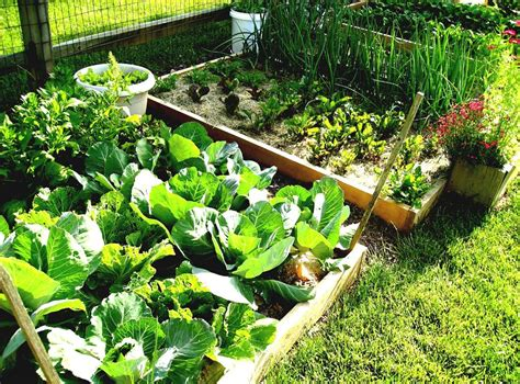 vertical vegetable gardening ideas thehrtechnologist