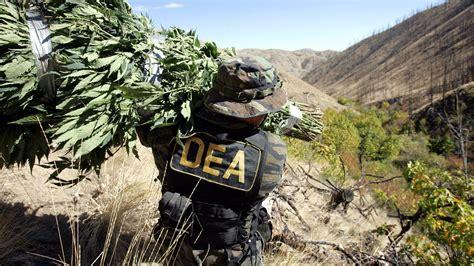 Dea Search New Report Blasts Dea For Spending 4 Decades Obstructing Marijuana Thc Finder