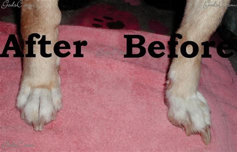 how to trim puppy nails when to trim your s nails god s creatures