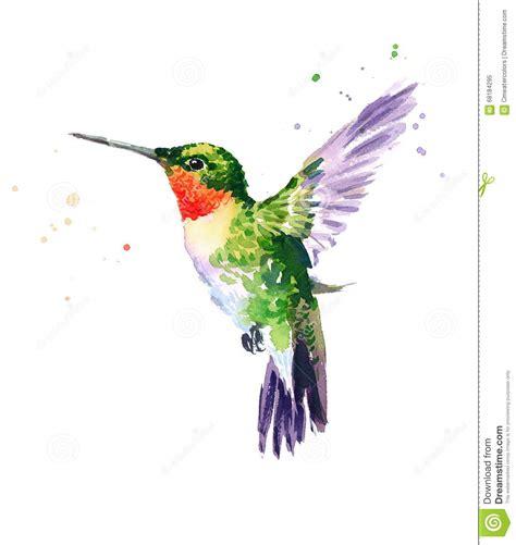 hummingbird flying watercolor bird illustration hand drawn