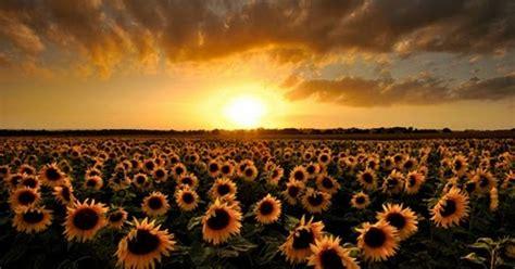 kata kata motivasi pagi hari puisi doa semangat blog news