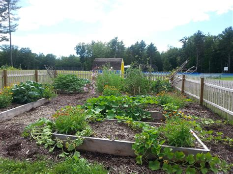 lincoln county newspaper maine medomak middle school garden project update the lincoln