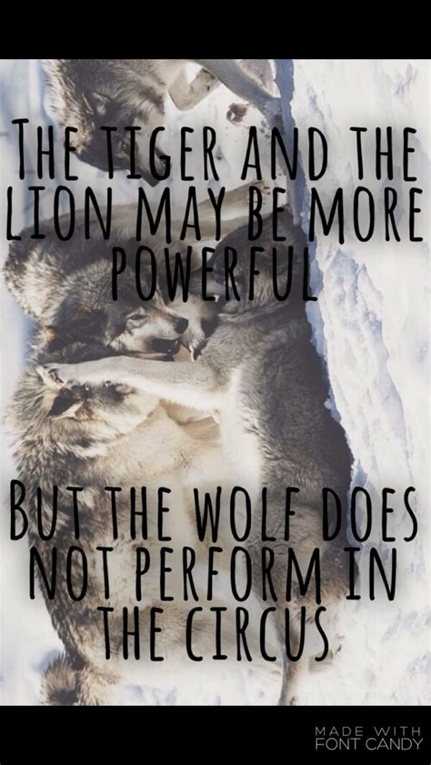 tiger   lion    power sayings power quote