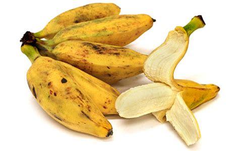 burro bananas information recipes  facts