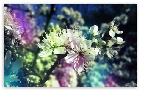 pics photos spring widescreen desktop wallpaper image