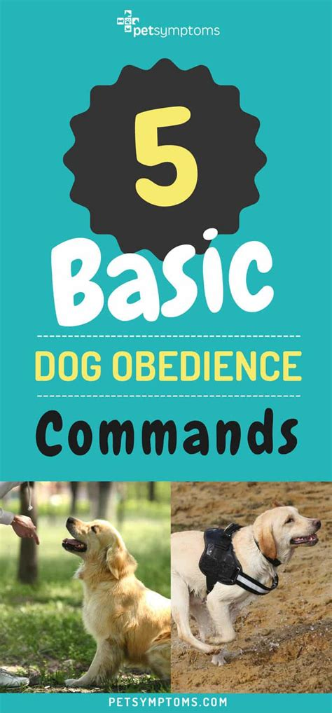 basic puppy commands 5 basic obedience commands pet symptoms
