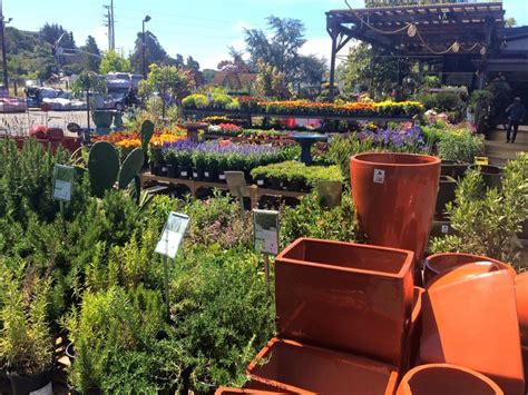 Sloat Garden by Solstice Sale Pictures Sloat Garden Center