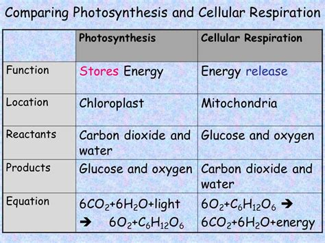 comparing photosynthesis and cellular respiration worksheet compare the equations for cellular respiration and photosynthesis jennarocca