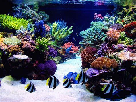 Desk Top Aquarium by Animal Aquarium Aquarium Animals Fish Hd Desktop Wallpaper