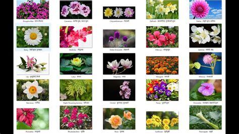 garden flowers names garden ftempo