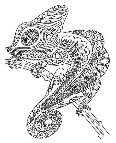 coloring pages for adults chameleon coloring book for adults with a chameleon