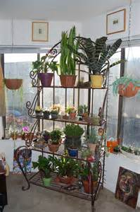 Indoor plant party far out flora