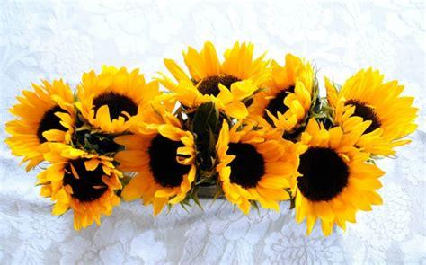 Dekorieren Mit Sonnenblumen by Sonnenblumen Und Ihr Dekorativer Wert