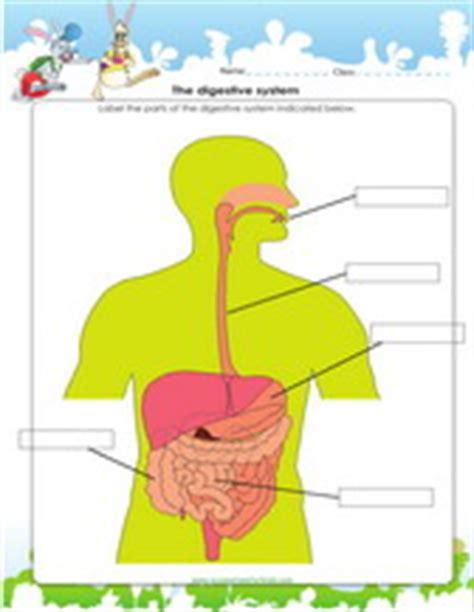 digestive system worksheet grade 4 4th grade science worksheets pdf printable
