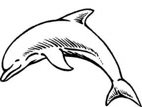 dolphin pictures to color dolphin coloring pages coloringpages1001