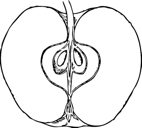 apple half coloring page apple food fruit outline cross drawing open half