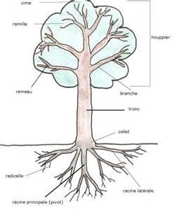 les arbres g i e des elagueurs ari 232 geois
