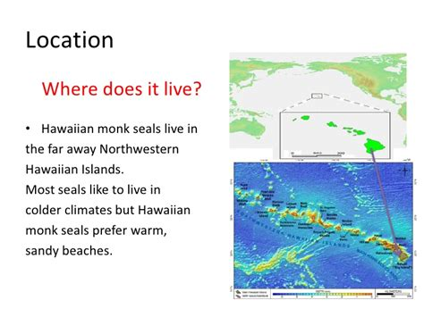 where does live hawaiian monk seal researched by nicholas tupp