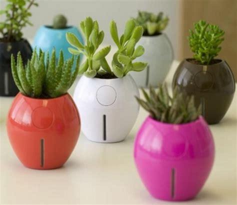 cara membuat lu hias mini cara membuat tanaman hias mini indoor dan outdoor