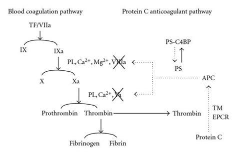 c protein coagulation lps toll like receptor mediated signaling on expression of