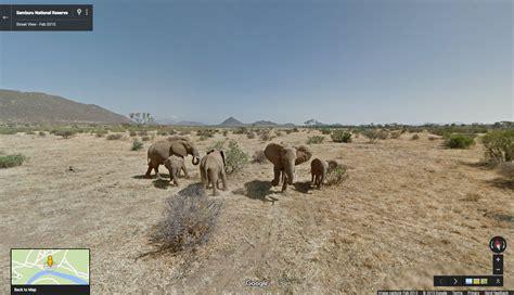 google images elephant official google blog walk alongside the elephants of the