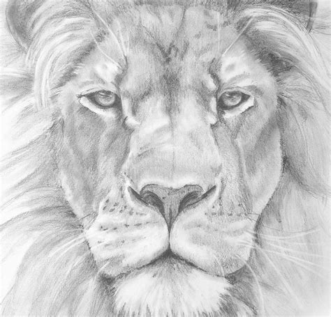 Pics Of Drawings Of