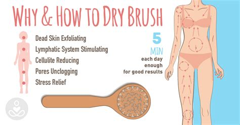 Brushing Detox by Brushing The Technique That Stimulates Your Lymph