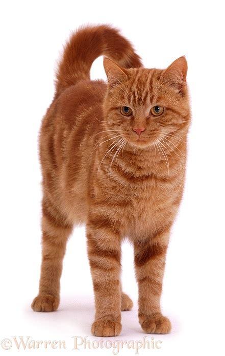 Tom Cat by Tom Cat Photo Wp02166