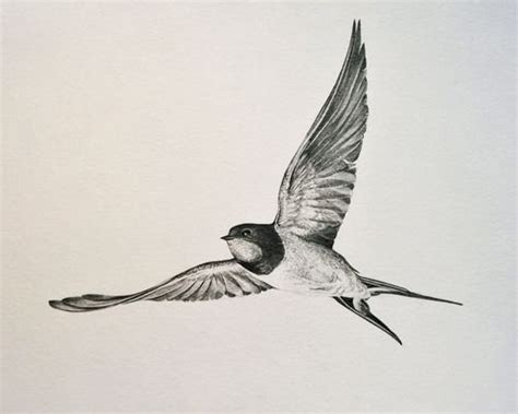 barn swallow tattoo designs best 25 barn ideas on