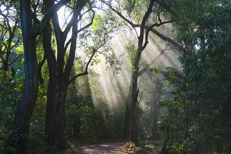 The Light In The Forest by Light In The Forest Photograph By Eyal Bartov