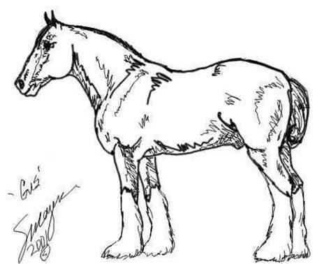 coloring pages of clydesdale horses clydesdale coloring pages sketch coloring page