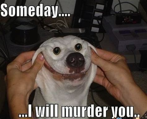 Animal Meme Pictures - how to make mondays awesome cute adorable hilarious pet