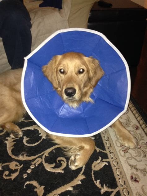 cone after surgery where we been tails of a