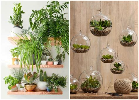 decorate  home  indoor plants  easy home decor