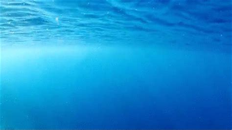 ocean life animated gif water ocean gif find share on giphy