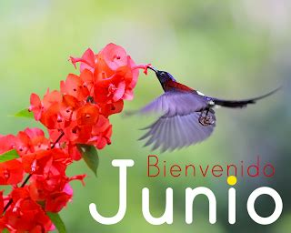 imagenes lindas con frases q digan bienvenida junio bellas im 225 genes del mes de junio para descargar gratis y