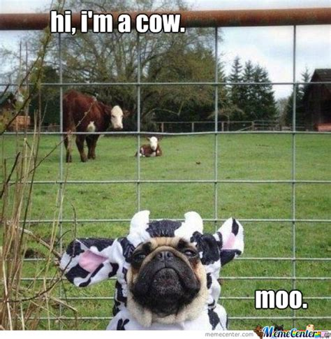 Moo Meme - moo by dwarb123 meme center