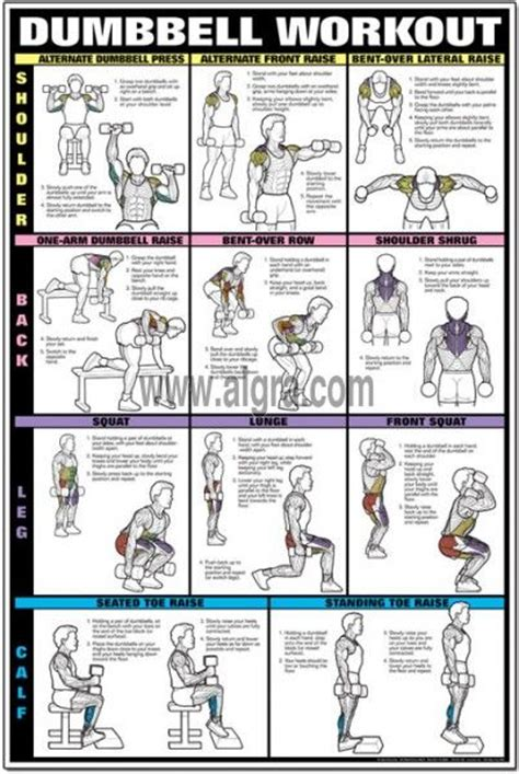 dumbbell workout ii poster shoulder back leg calf