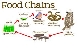 Ford Chaign Food Chains For Food Webs The Circle Of And