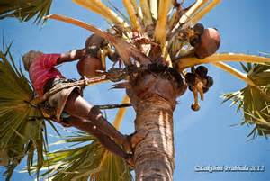 What Are The Parts Of A Flower Called - palm wine toddy kallu travelogues