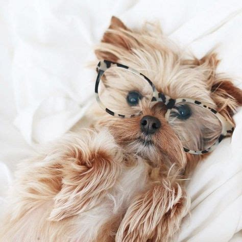 how smart are yorkies best 25 yorkie ideas on