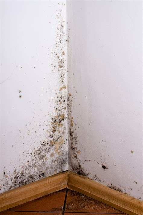 Moisture In Bedroom by How To Save Your Tiny House From Mold Tinyhousebuild